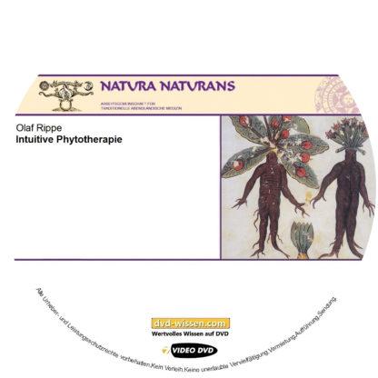 Olaf Rippe: Intuitive Phytotherapie 1 DVD-Wissen - Experten Know How - Dokus, Filme, Vorträge, Bücher